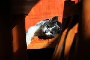 cat-56753_960_720